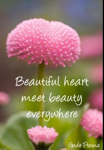 Beautiful Heart Meet Beauty Everywhere Bell Of Peace