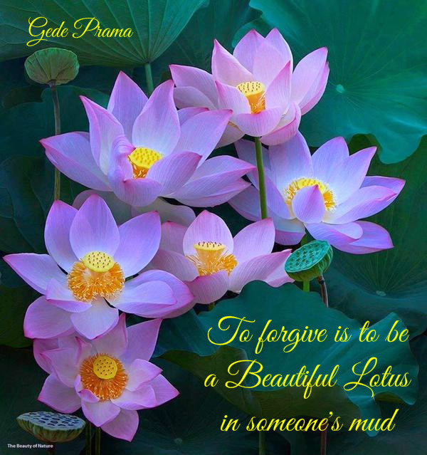 To forgive is to be a beautiful lotus in someones mud bell of peace photo courtesy twitter natalycriz creative bellofpeace original quote gede prama mightylinksfo