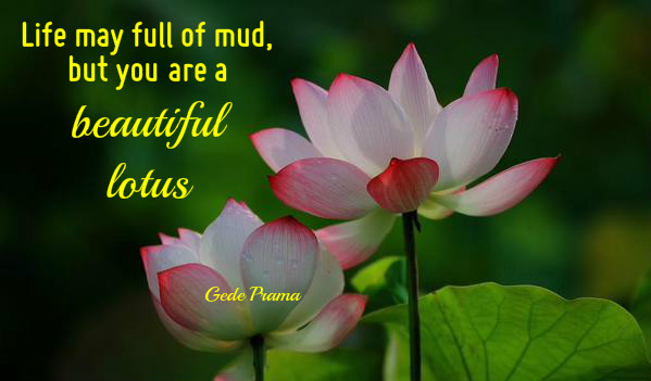 Life may full of mud but ure a beautiful lotus bell of peace photo courtesy twitter alexineaud creative bellofpeace original quote gede prama mightylinksfo